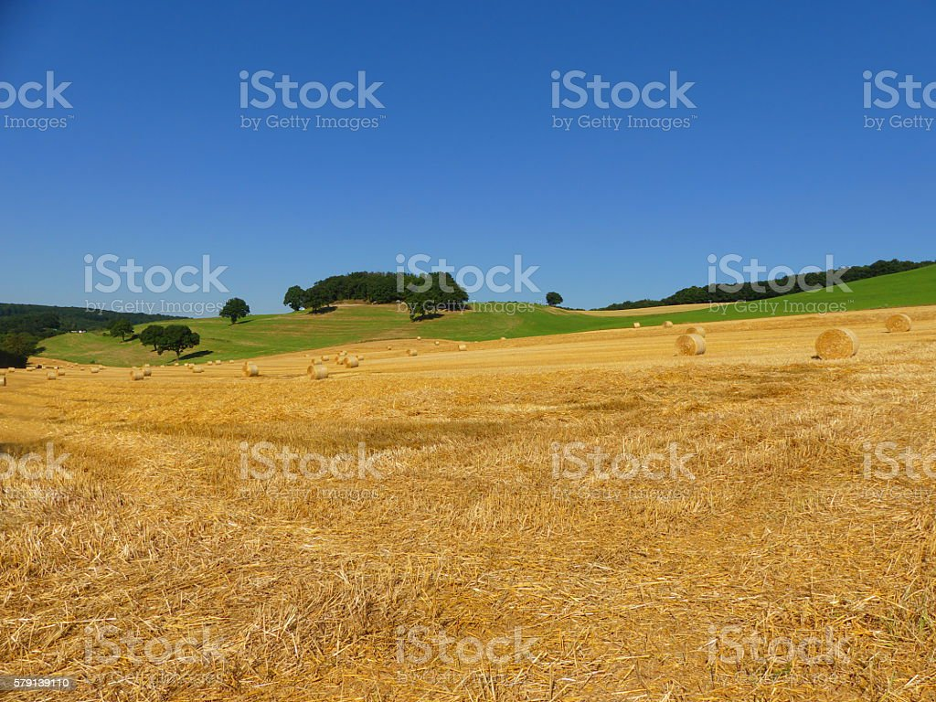 golden summer stock photo