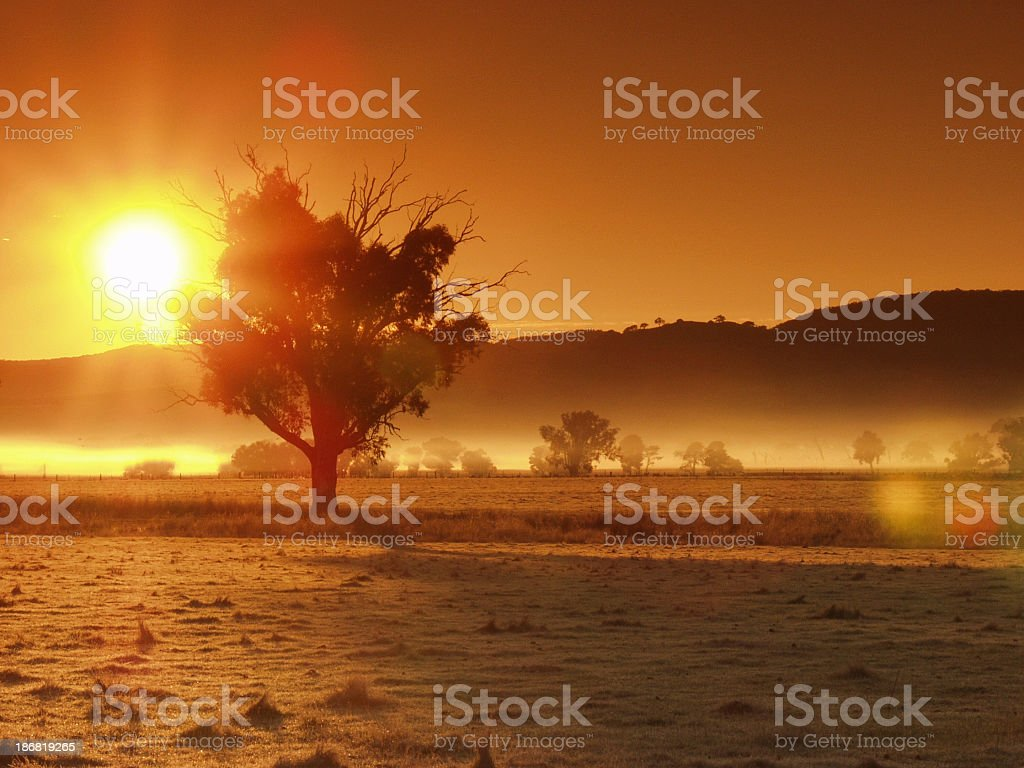 Golden sun and glow over the landscape with trees stock photo