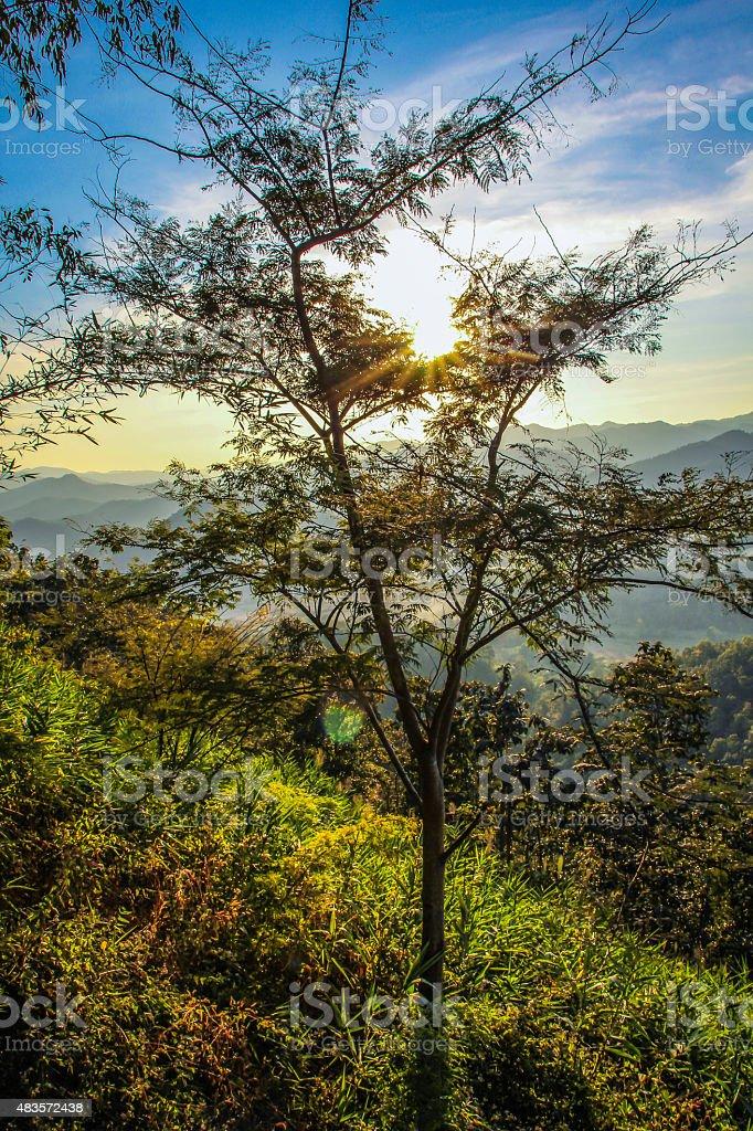Golden Sun Through Forest royalty-free stock photo