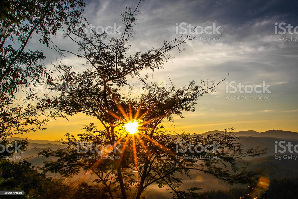 Golden Sun Through Forest royalty-free stock photo
