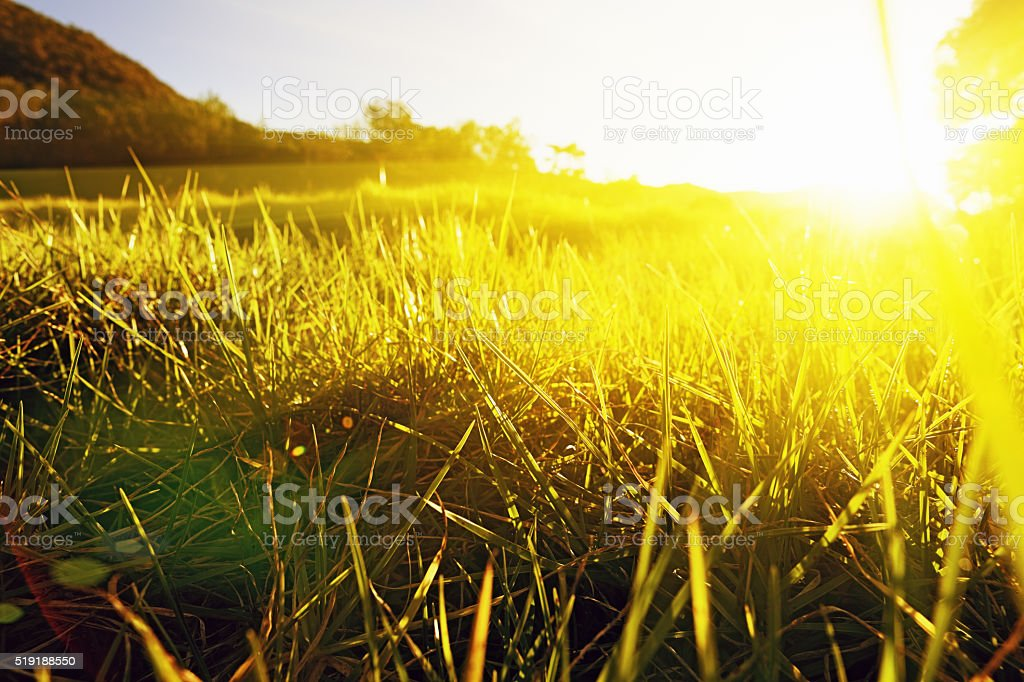 Golden sunlight pouring over green meadow stock photo
