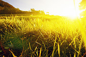 Golden sunlight pouring over green meadow