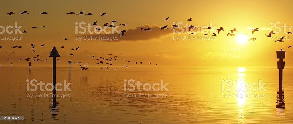 Golden Sunrise Flight stock photo
