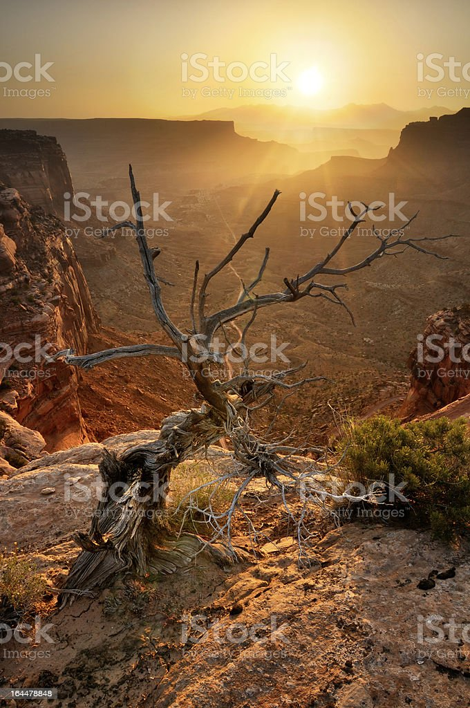 Golden sunrise landscape wuth dry tree in Canyonlands, Utah, USA royalty-free stock photo