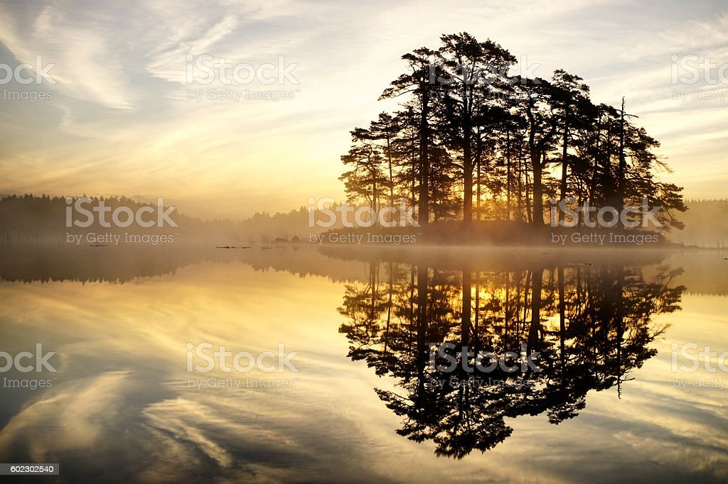 Golden Sunrise stock photo