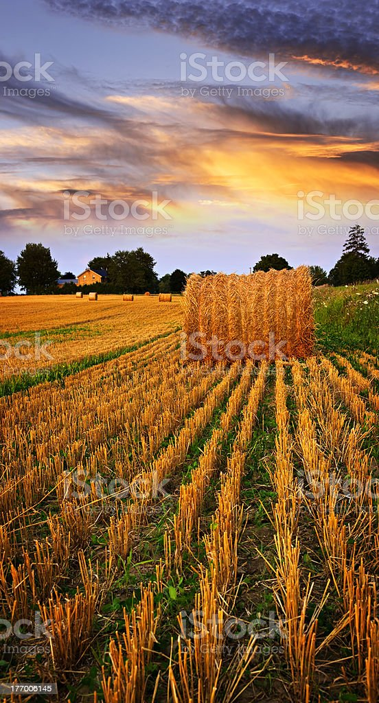 A golden sunset over a field of harvested wheat royalty-free stock photo