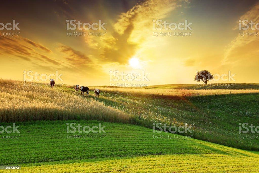 Golden Sunset over Idyllic Farmland Landscape stock photo
