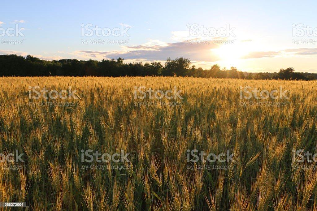 Golden Sonnenuntergang  Lizenzfreies stock-foto