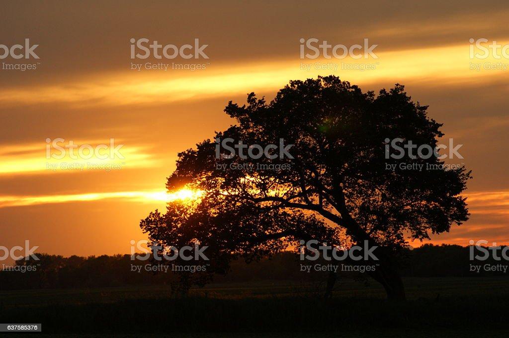 Golden Sunset Shining through Tree stock photo