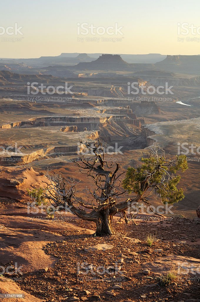Golden sunset view in Canyonlands, Utah, USA royalty-free stock photo