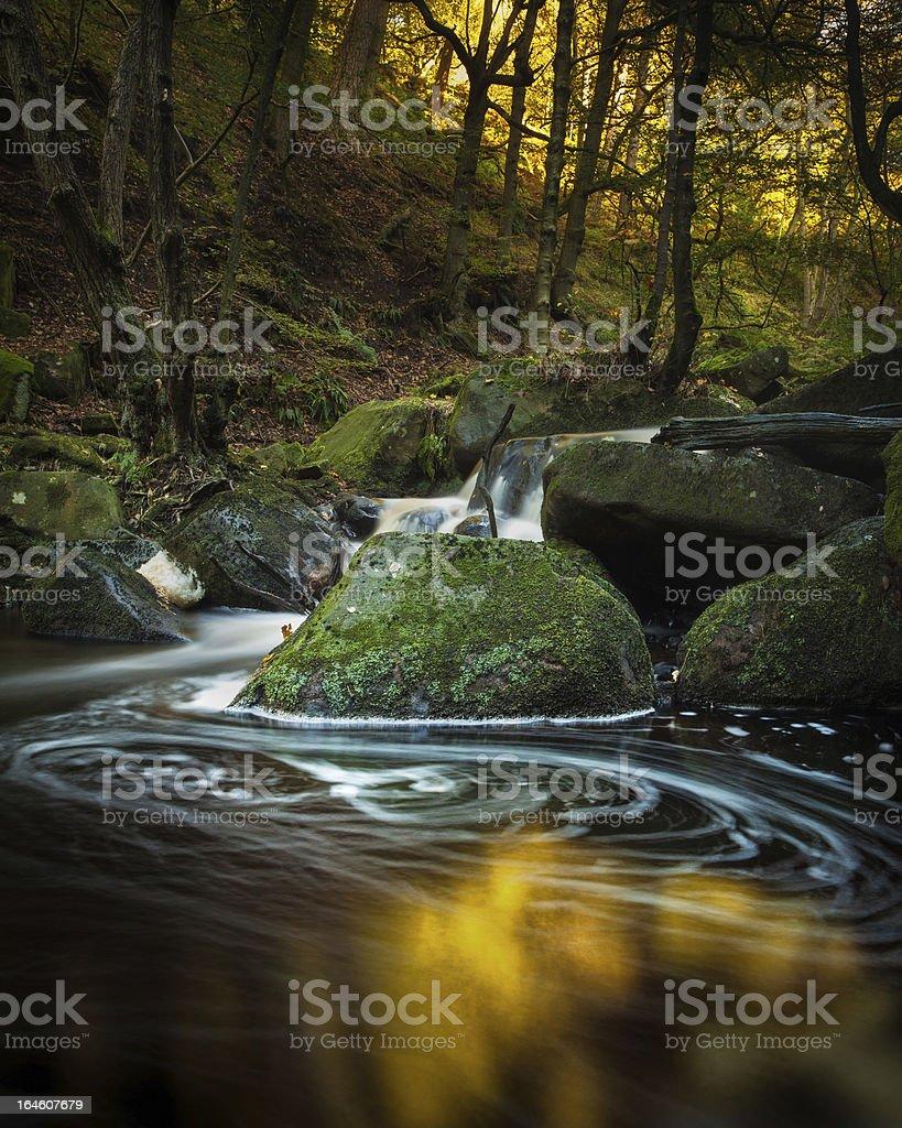 Golden Swirl stock photo