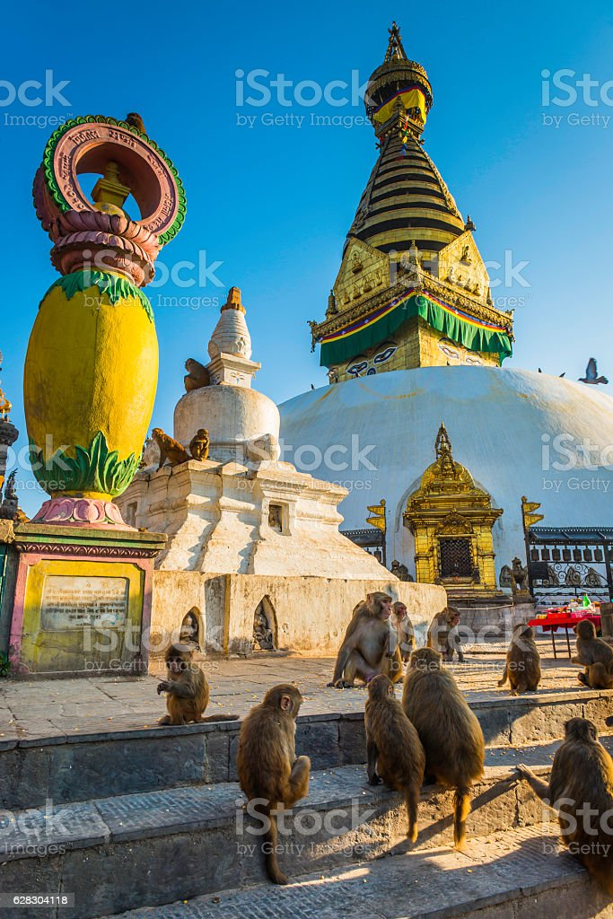 Golden temples Buddhist stupas macaque monkeys Swayambhunath Kathmandu Nepal stock photo