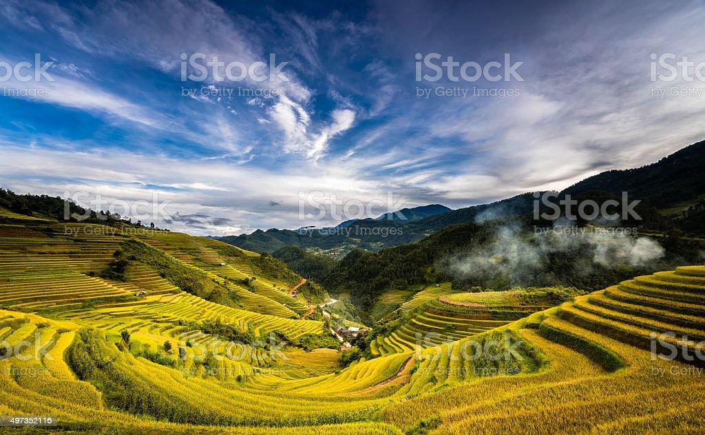 Golden terraces fields in North Vietnam stock photo