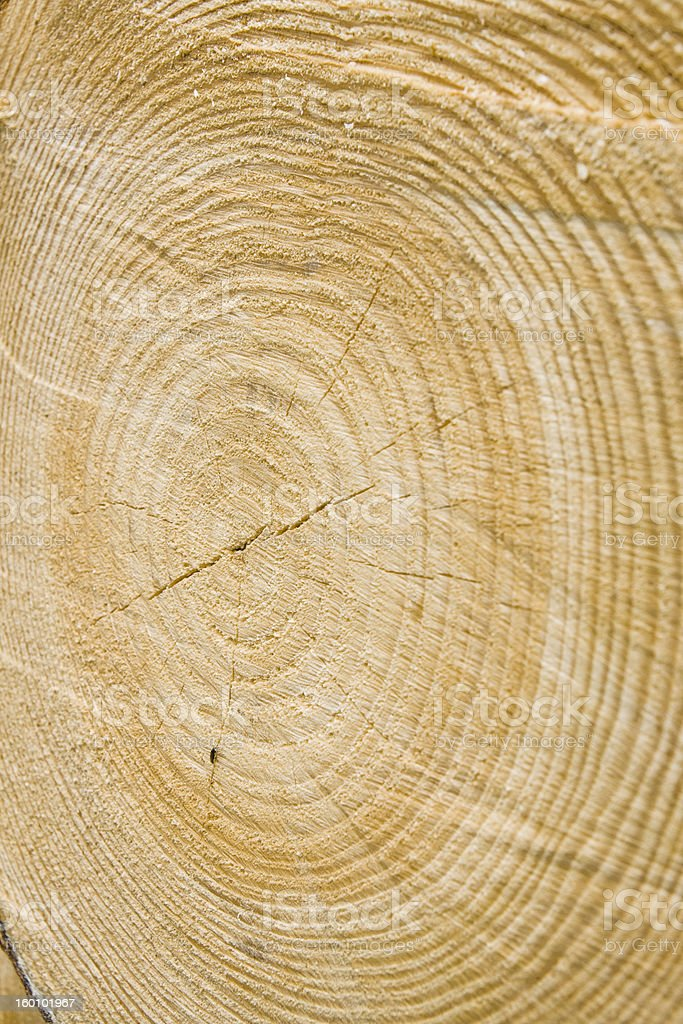 Golden timber tree rings stock photo