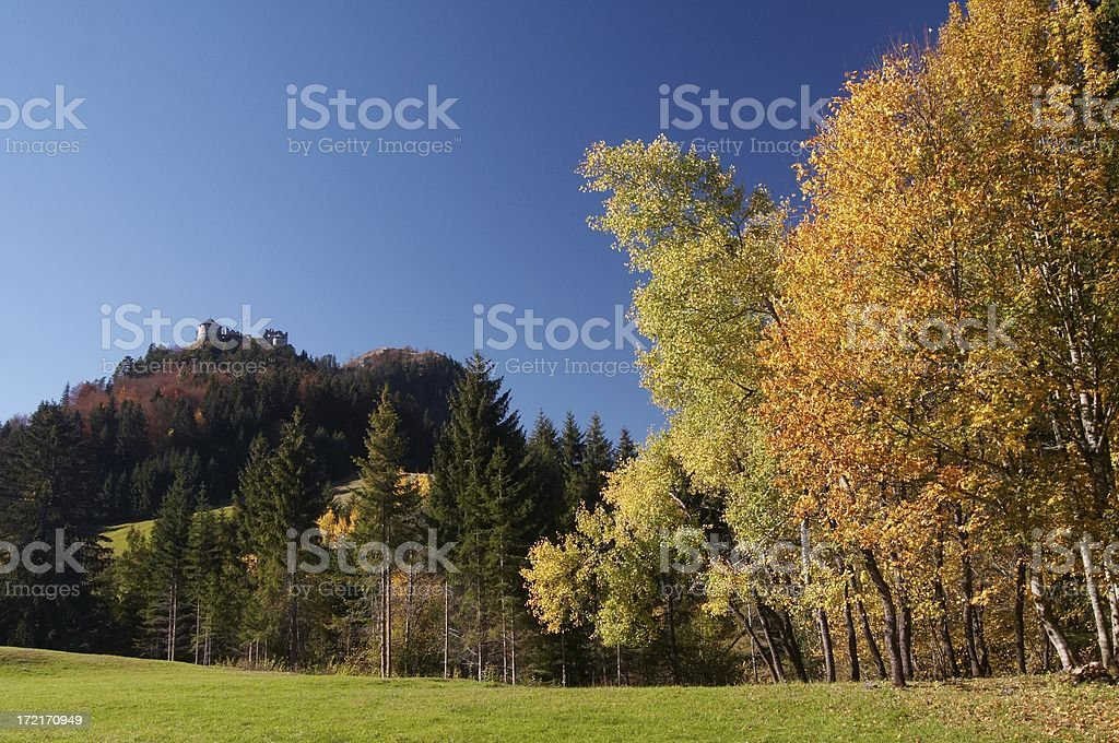golden trees royalty-free stock photo