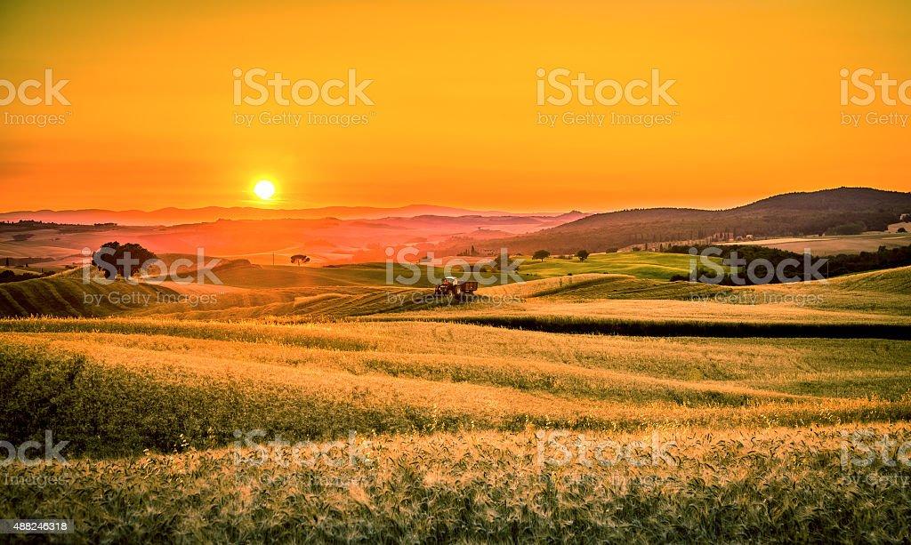 Golden tuscan sunset stock photo