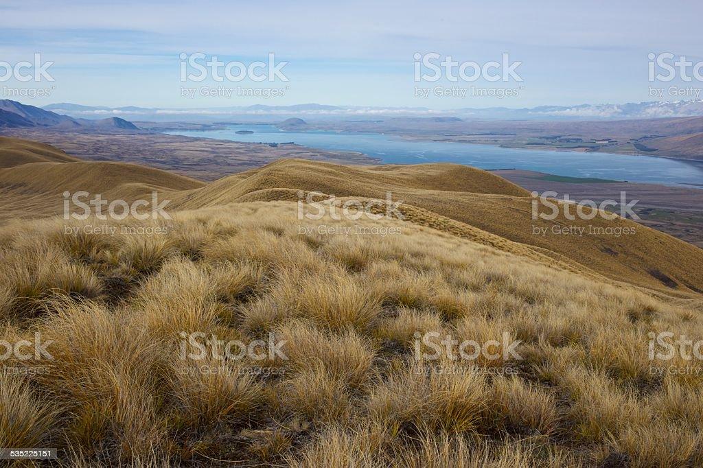 Golden tussock grassland above Lake Tekapo stock photo