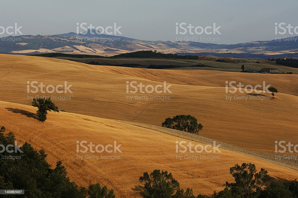 Golden undulating hill royalty-free stock photo