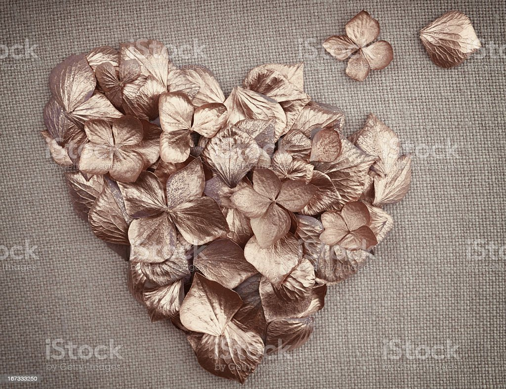 Golden vintage hydrangea  flower petals  in the shape of  heart royalty-free stock photo