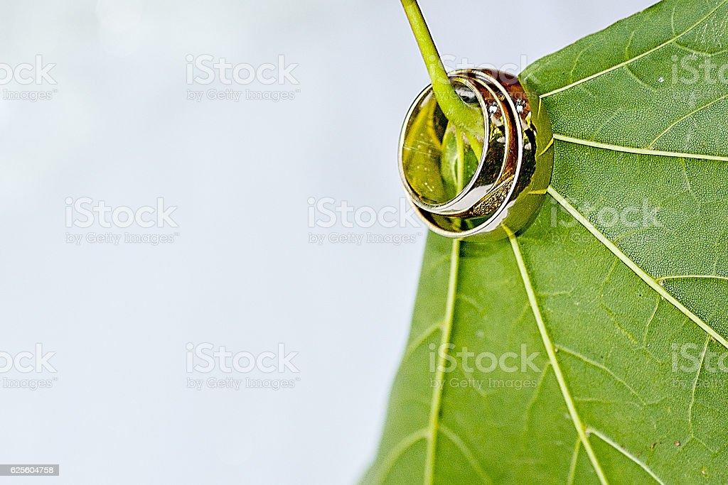 Golden wedding rings threaded through the leaf stem stock photo