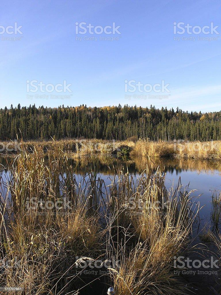 Golden Wetland royalty-free stock photo