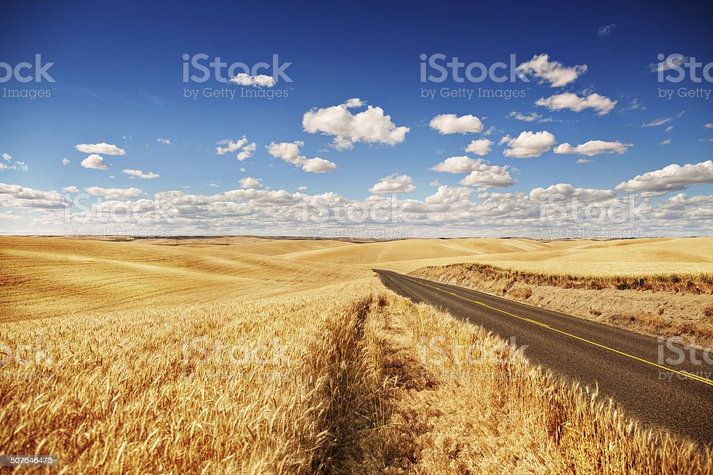 Golden wheat field, road through, blue sky stock photo