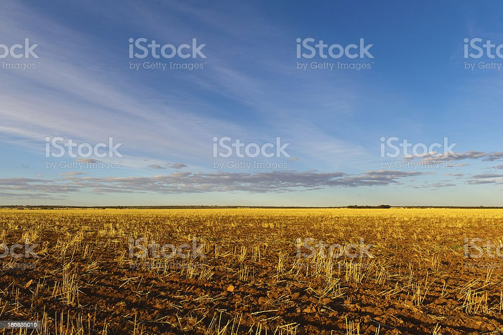 Golden Wheat Fields freshly seeded in the Wheatbelt Region stock photo