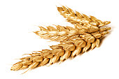 Golden wheat on white background - close-up