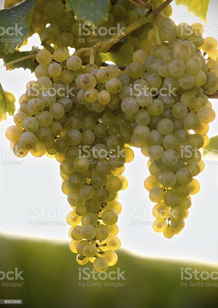 golden wine stock photo