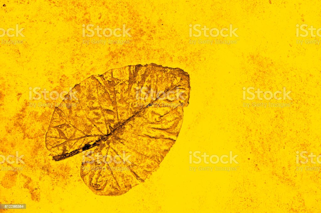 Golden with yellow texture pattern abstract background stock photo