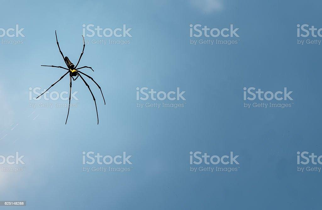 Golden Wood Spider stock photo