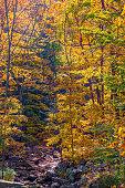 Golden Woodlands