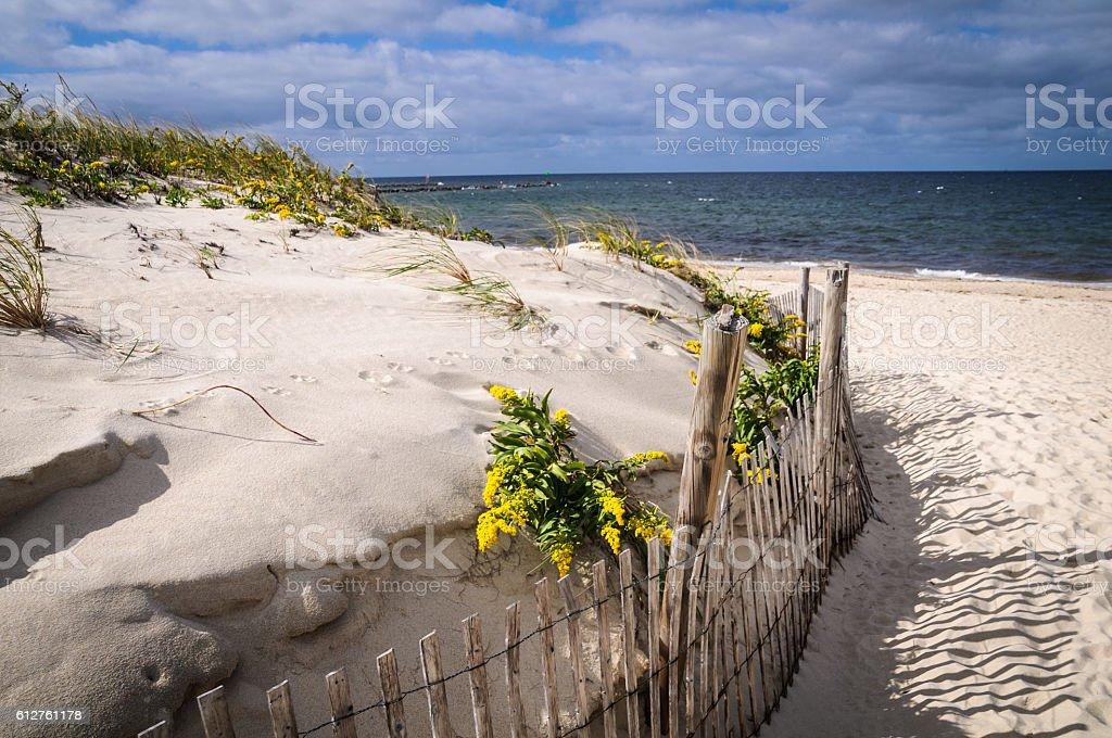 Goldenrod along the Fence stock photo