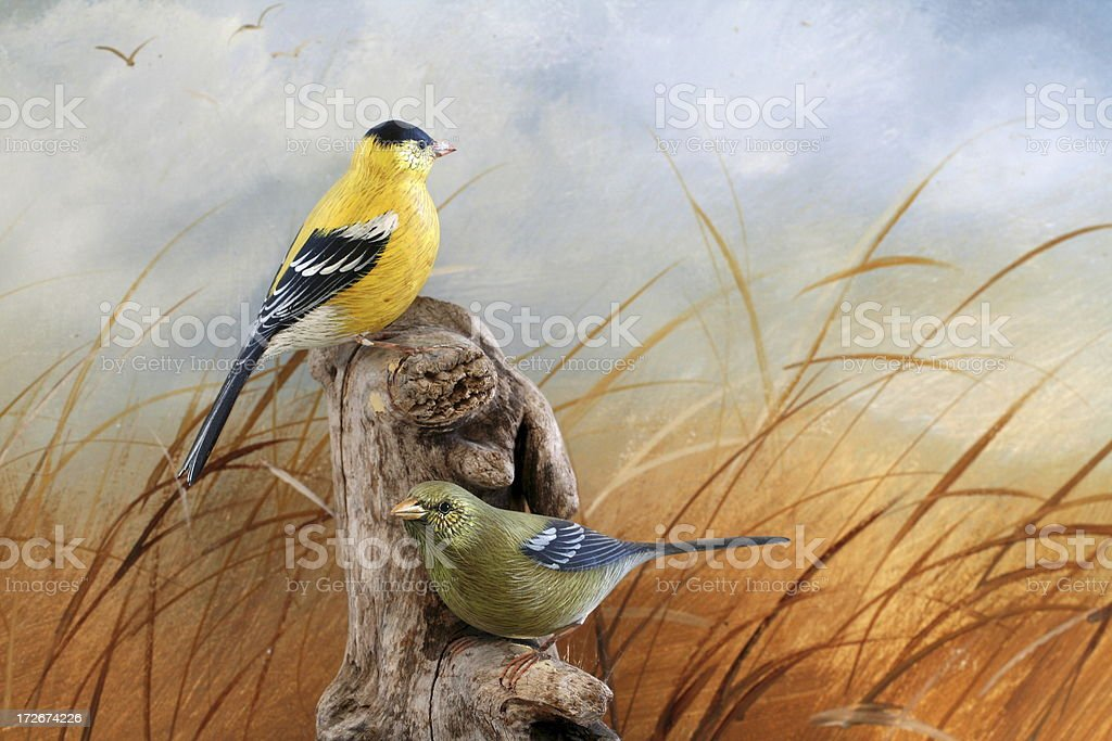 Goldfinches royalty-free stock photo