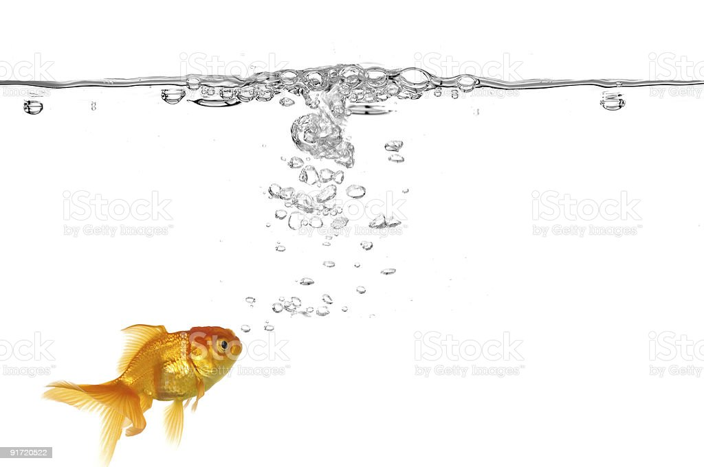 Goldfish and air bubbles stock photo