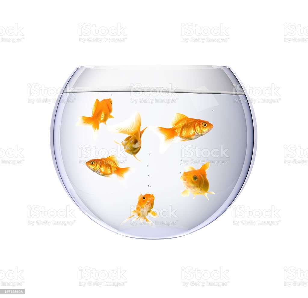 Goldfish Bowl royalty-free stock photo