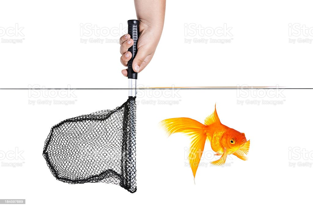 Goldfish Escape stock photo