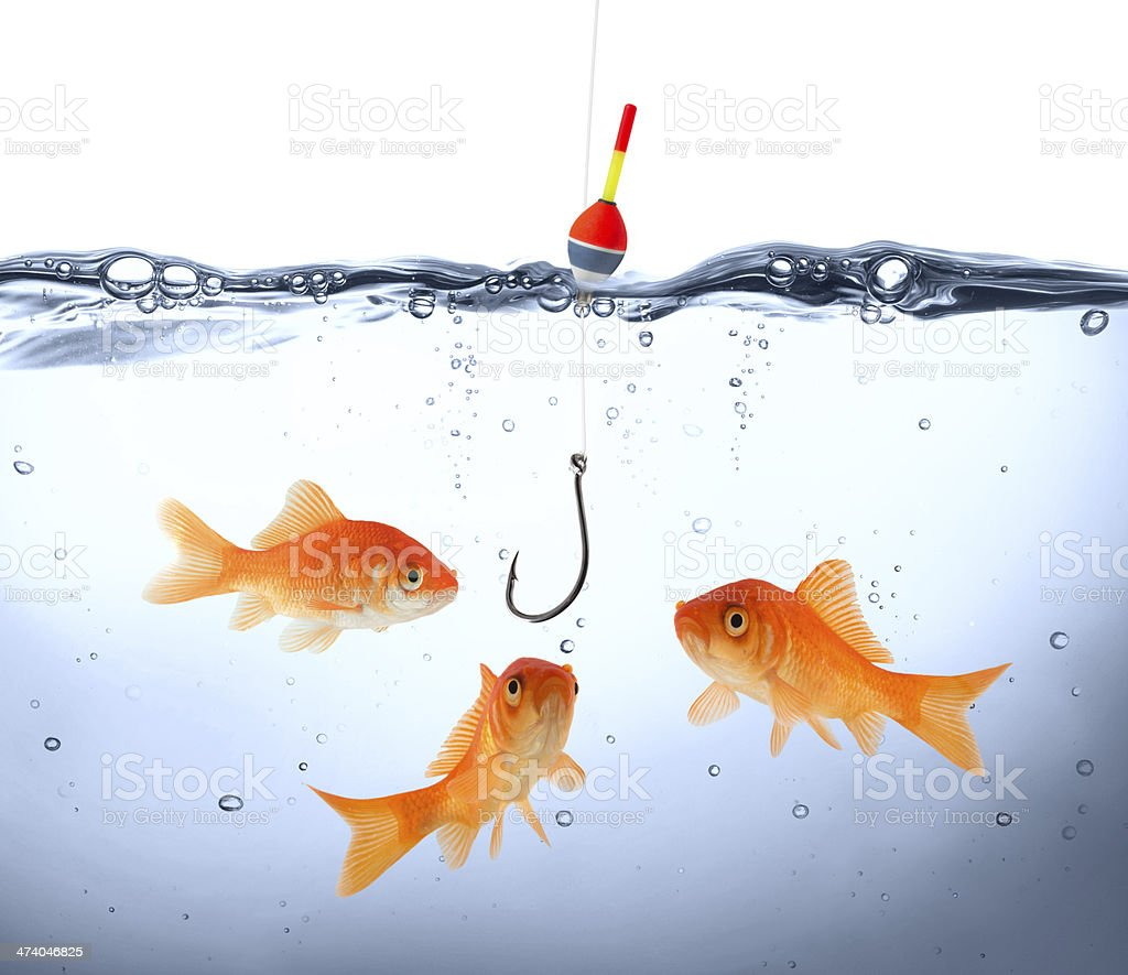 Goldfish gathered around dangling fish hook stock photo