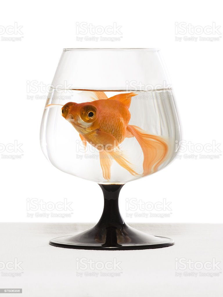 Goldfish in a glass stock photo