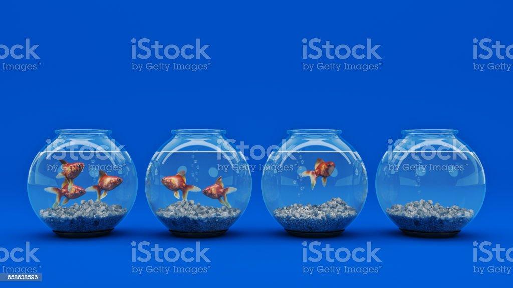 Goldfish in aquarium. stock photo