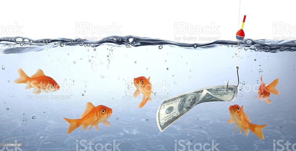 goldfish in danger - money stock photo