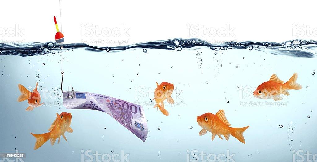 goldfish in danger stock photo