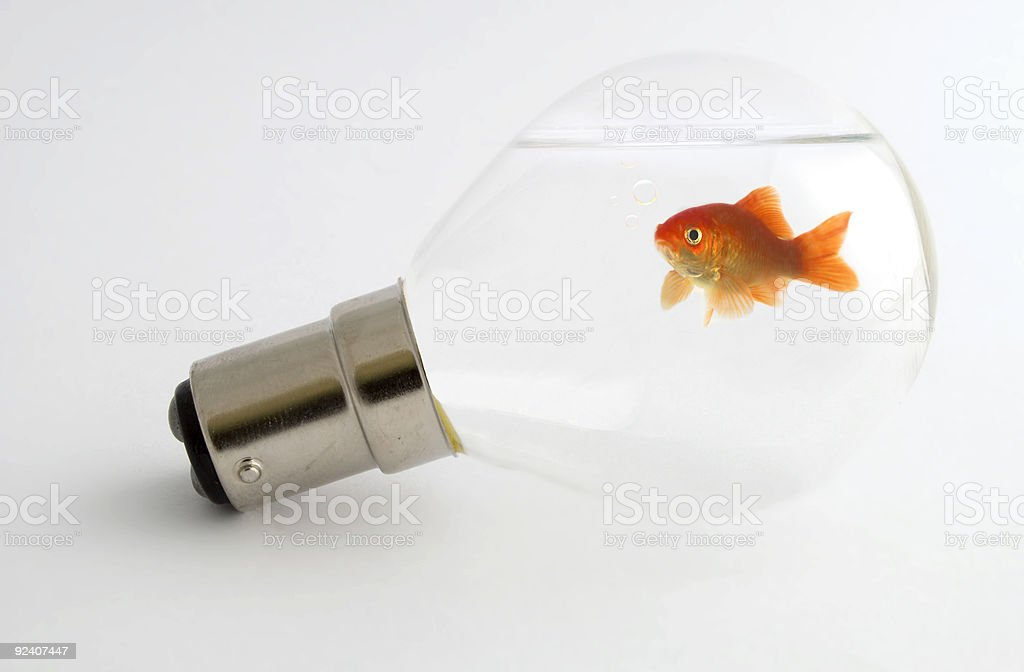Goldfish in light bulb royalty-free stock photo
