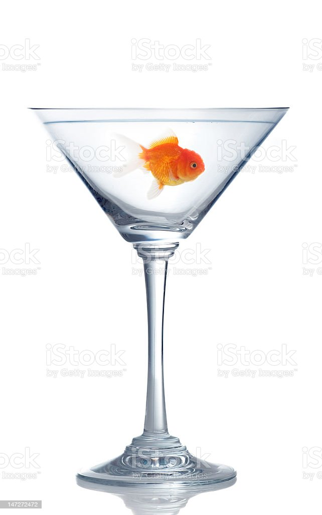 goldfish in martini glass royalty-free stock photo