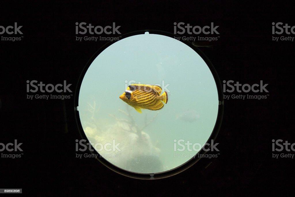 Goldfish in Porthole royalty-free stock photo