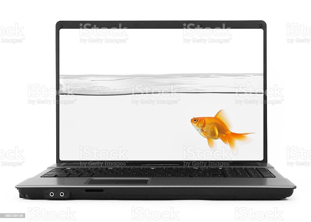 goldfish inside notebook royalty-free stock photo