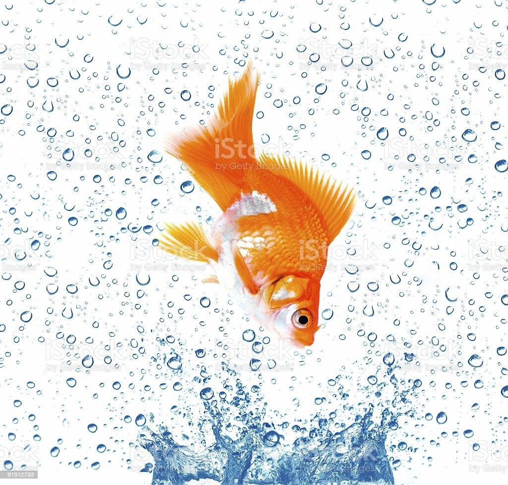 Goldfish is jumping stock photo