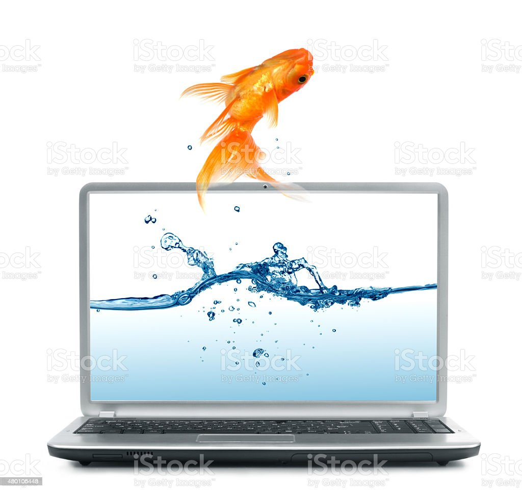Goldfish jump out of the monitor stock photo