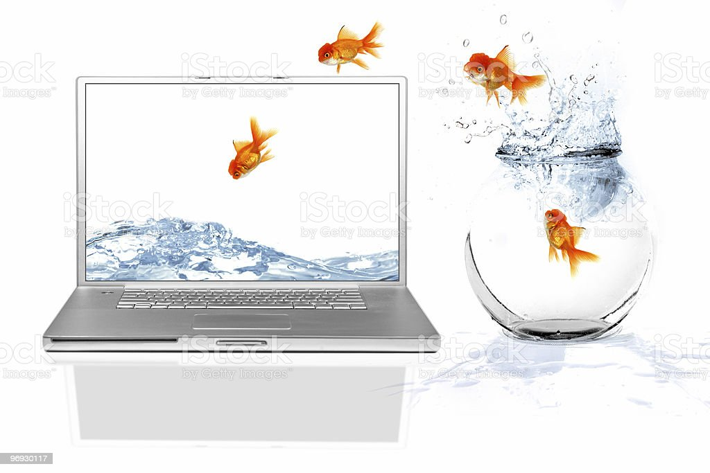 Goldfish jumping from small bowl to laptop screen stock photo