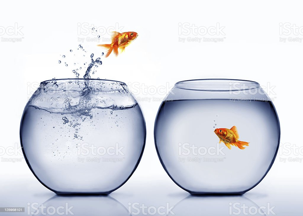 Goldfish jumping out of bowl stock photo